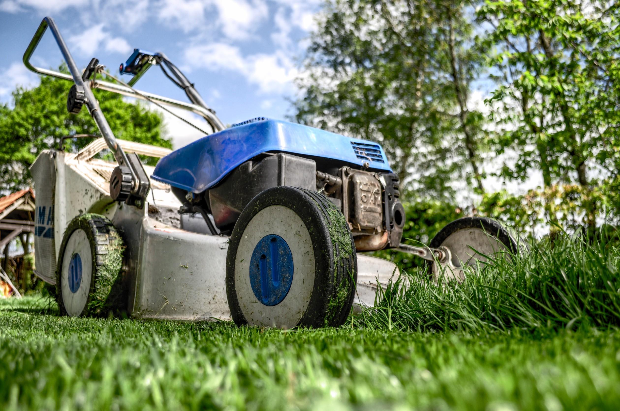Garden Grass Meadow Green 589